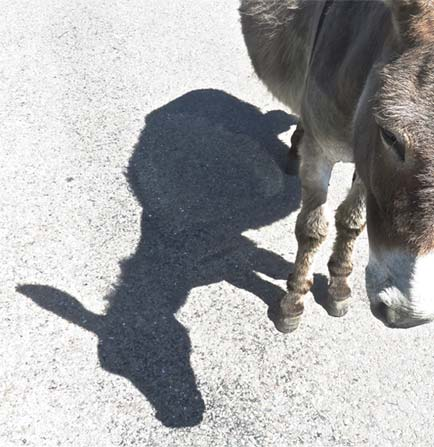 Donkey and Shadow